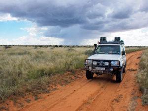 Safari drive in kathu